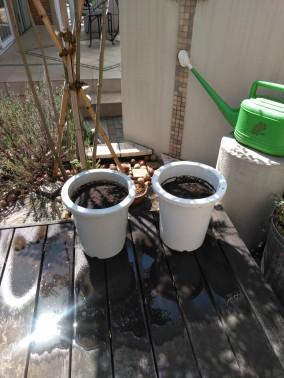 植木鉢でもチャレンジ