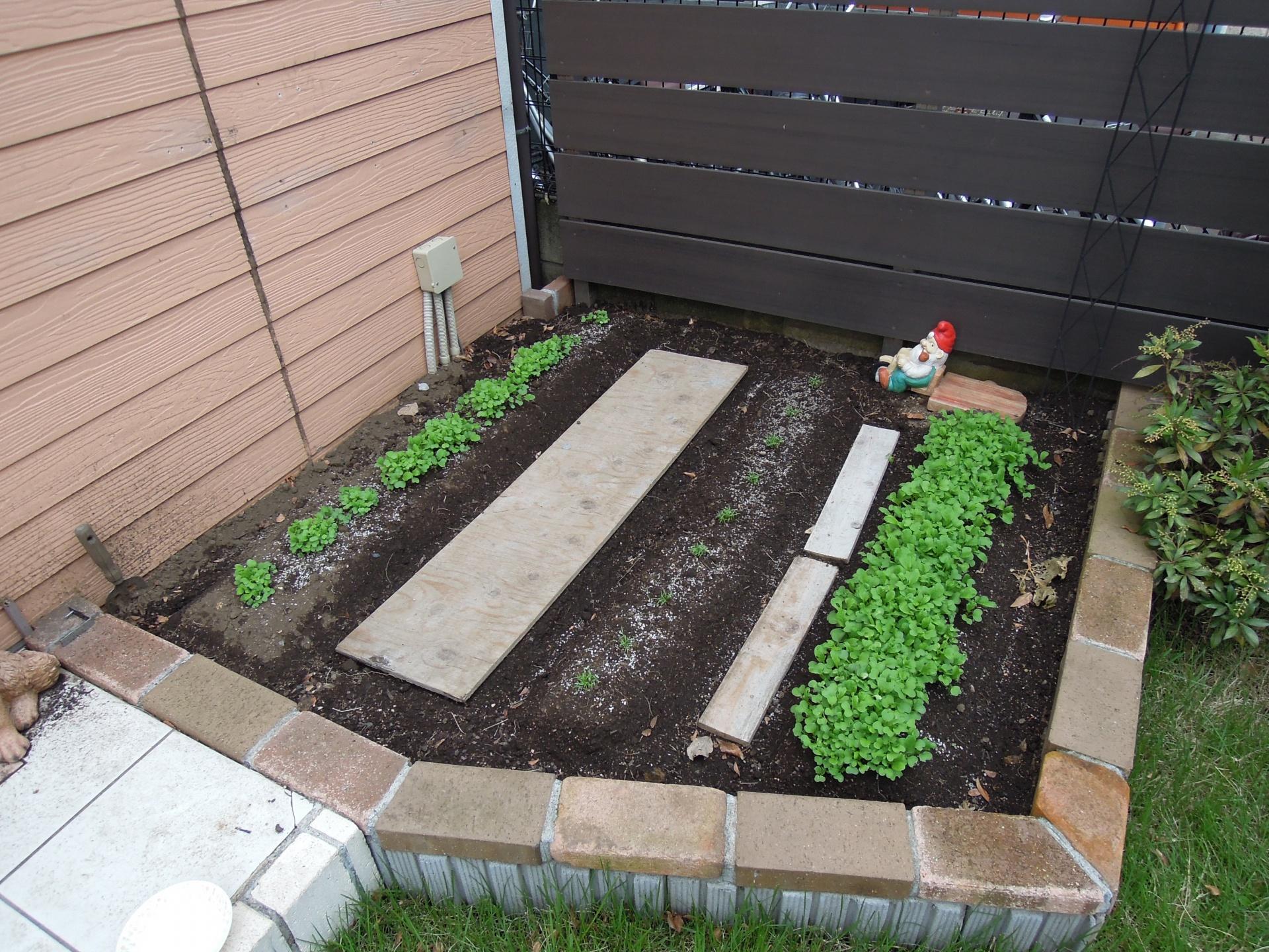菜園 秋 家庭